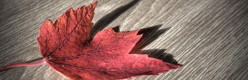 Fotowettbewerb_Herbst_2013_2