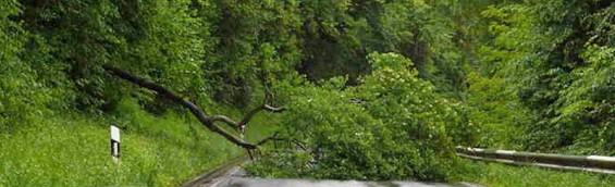 Baum Unwetter umgefallen