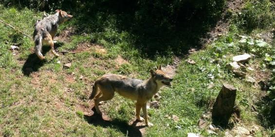 Wolf Windeck
