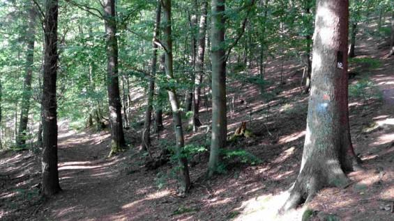 Waldwegebau in Altwindeck, Schlossberg
