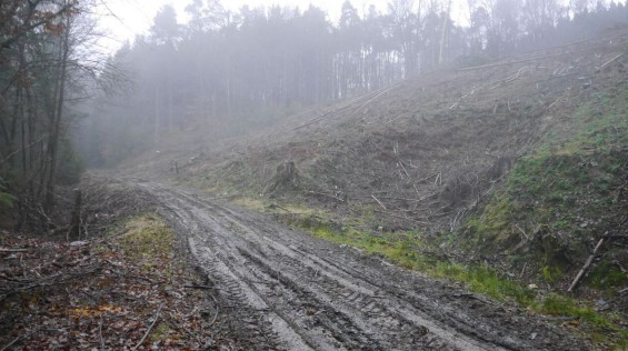 Waldwege Abholzung