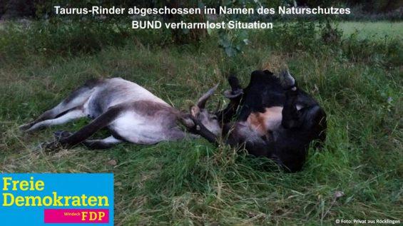 Taurus-Rinder abgeschossen im Namen des Naturschutzes - BUND verharmlost Situation